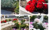 「言葉にできないこと、それが花の魅力」flower gardening